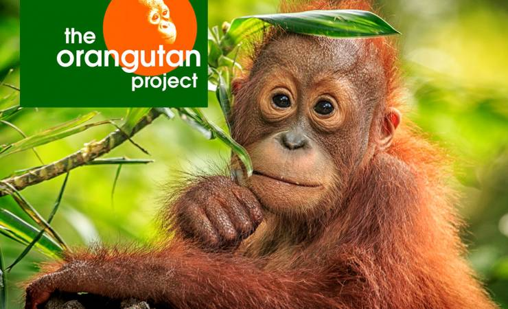 Orangutan and habitat support