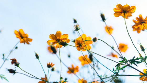 6 Natural Ways To Relieve Spring Allergies