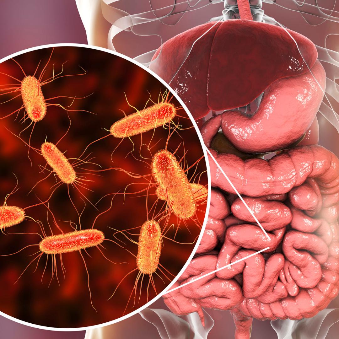 microbiome prebiotics